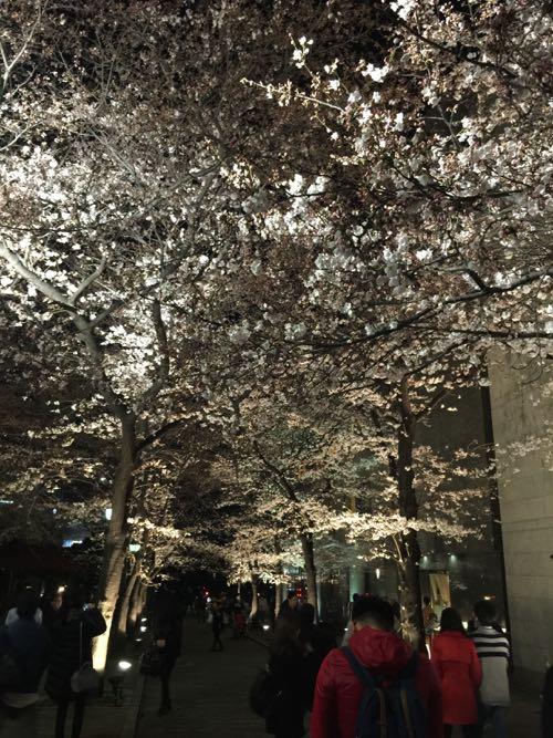 桜が咲き始めました_c0108595_1243578.jpg