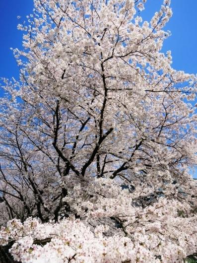花真っ盛り!_b0083801_12080625.jpg