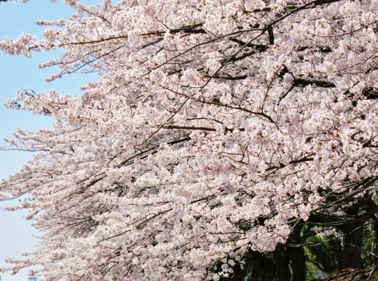 花真っ盛り!_b0083801_12082363.jpg
