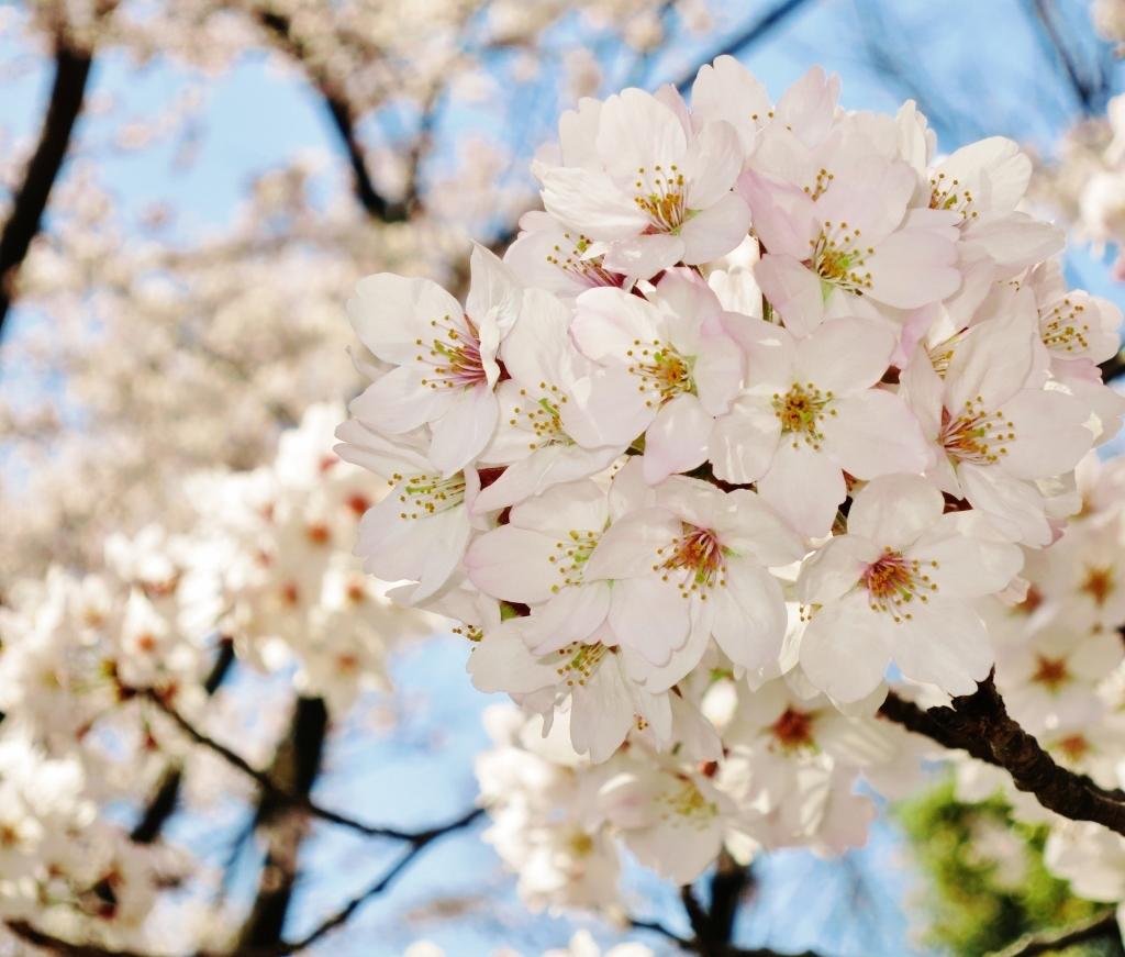 花真っ盛り!_b0083801_12084367.jpg