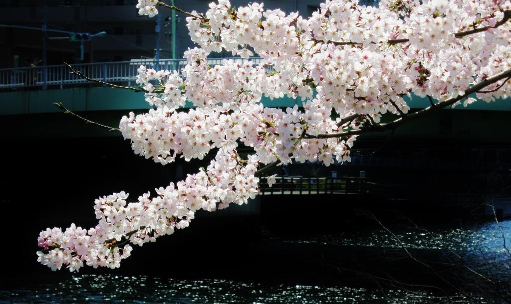 花真っ盛り!_b0083801_12092865.jpg
