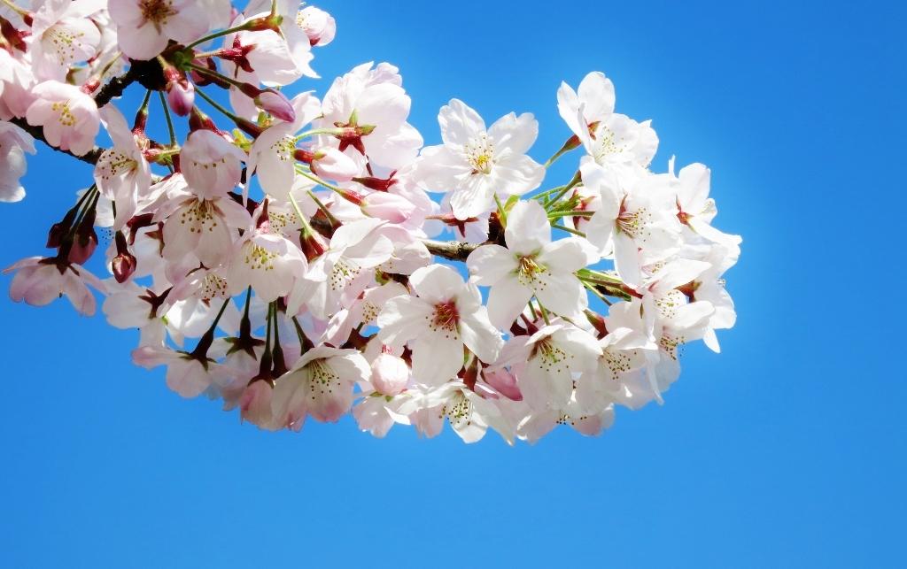 花真っ盛り!_b0083801_12094814.jpg