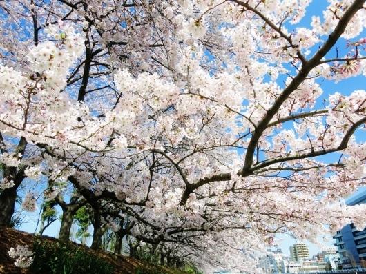 花真っ盛り!_b0083801_12100668.jpg