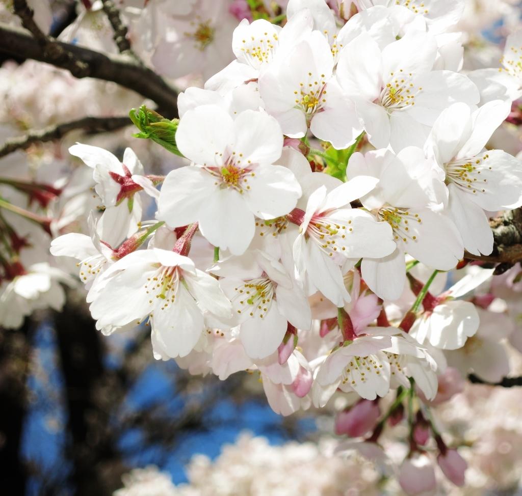 花真っ盛り!_b0083801_12102740.jpg