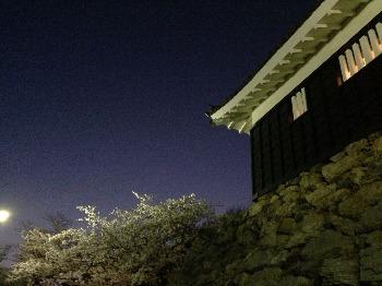 夜桜散歩_c0203401_15163851.jpg