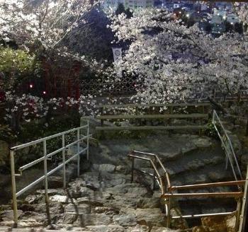 夜桜散歩_c0203401_15172161.jpg