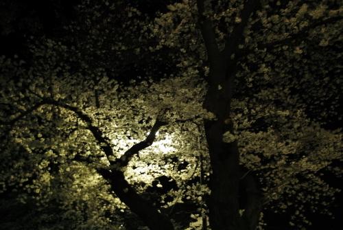 部屋の空気。部屋の光。_c0334705_13064218.jpg