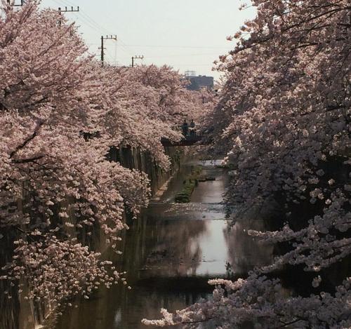 催事御礼&4月の予定_f0235809_1453034.jpg