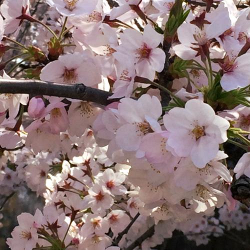 催事御礼&4月の予定_f0235809_14532956.jpg