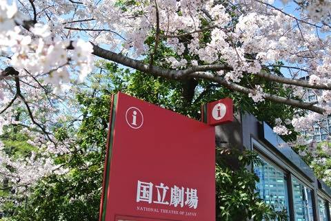 桜 VS ブルーシート!_a0037910_07235543.jpg