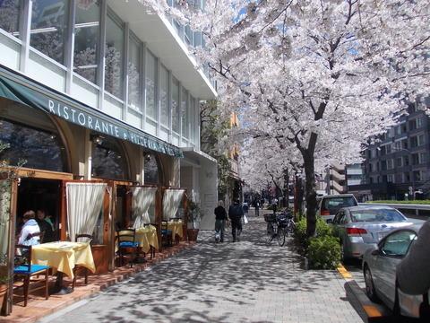 桜 VS ブルーシート!_a0037910_07461422.jpg