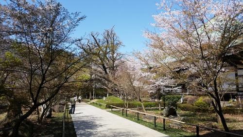 春満開_d0191211_12273.jpg
