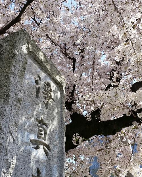 春満開_d0191211_128095.jpg