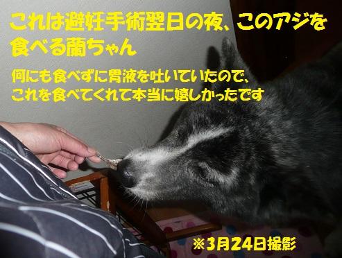 f0121712_64135.jpg