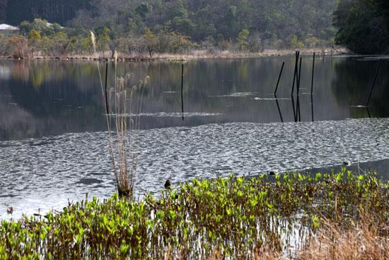 みぞろが池の春景色_e0048413_22112071.jpg