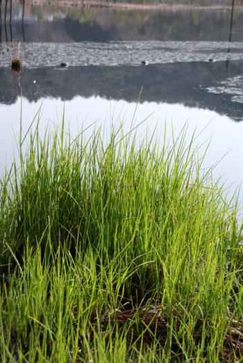 みぞろが池の春景色_e0048413_22123376.jpg