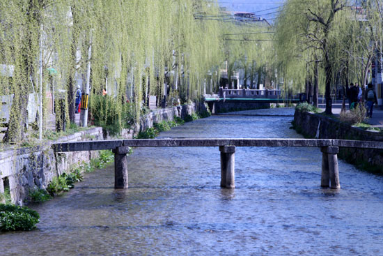 古川町の若柳_e0048413_22505239.jpg