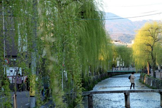 古川町の若柳_e0048413_22511386.jpg
