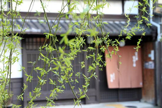 古川町の若柳_e0048413_22513858.jpg