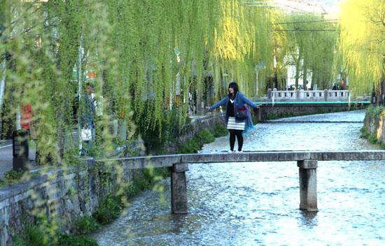 古川町の若柳_e0048413_22514960.jpg