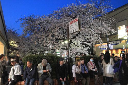 木屋町満開 15桜だより10_e0048413_233116100.jpg
