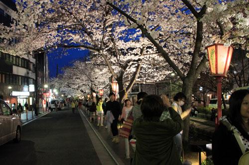 木屋町満開 15桜だより10_e0048413_2331317.jpg