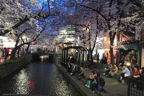 木屋町満開 15桜だより10_e0048413_23315175.jpg