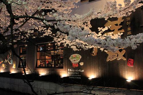 木屋町満開 15桜だより10_e0048413_23322550.jpg