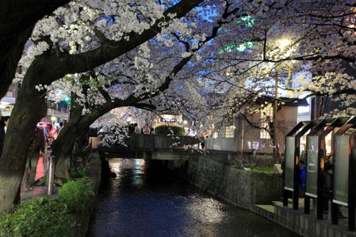 木屋町満開 15桜だより10_e0048413_23323947.jpg