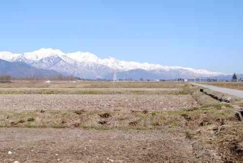 池田町にも春の訪れ_c0218716_18181648.jpg