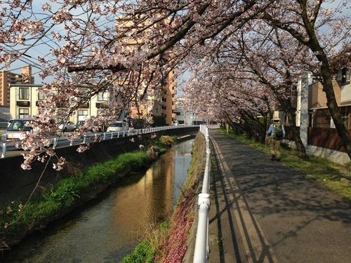 春_e0028417_836195.jpg