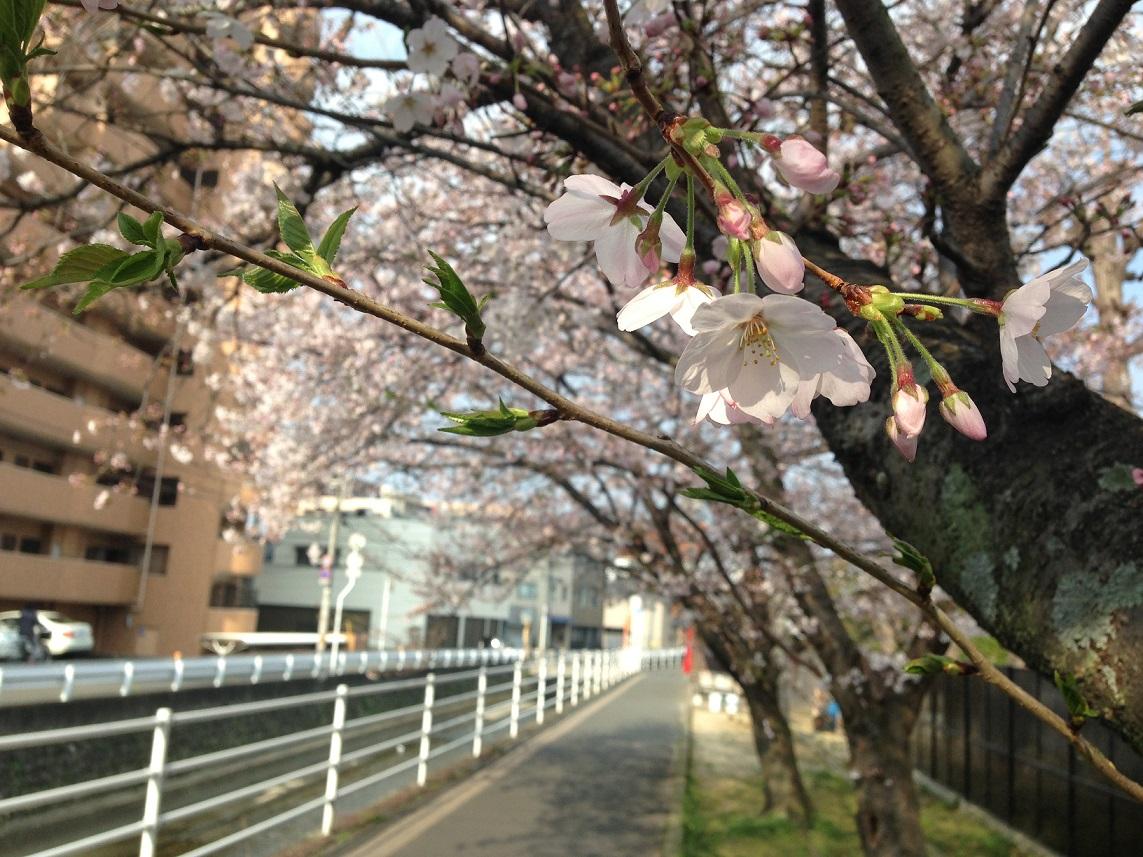 春_e0028417_8363383.jpg