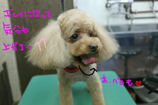 桜-!!_b0130018_22585743.jpg