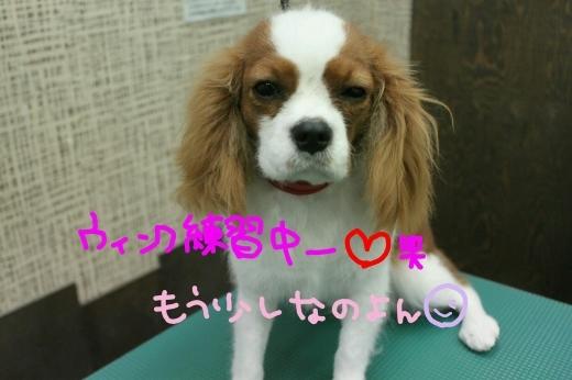 桜-!!_b0130018_22585881.jpg