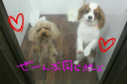 桜-!!_b0130018_22590057.jpg