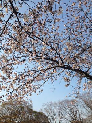 季節のお菓子 花見のお供_c0006826_1940156.jpg