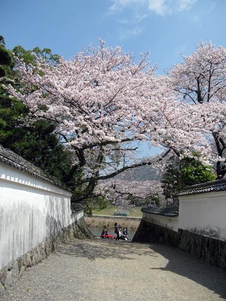 おかげ横丁 おはらい町 桜情報_f0129726_21515894.jpg