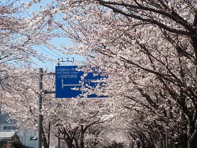 桜見物_d0157745_19141425.jpg