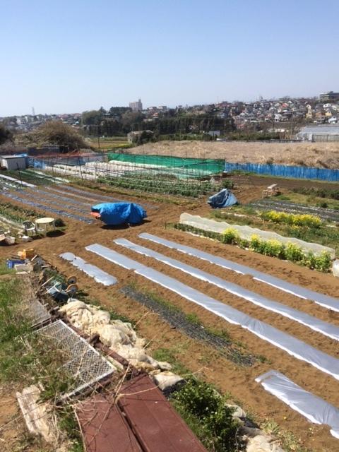堆肥の攪拌と畑への運び入れ _c0222448_12301354.jpg
