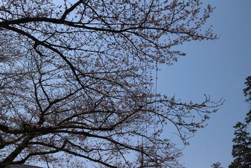 桜実況中継_c0078659_12552141.jpg
