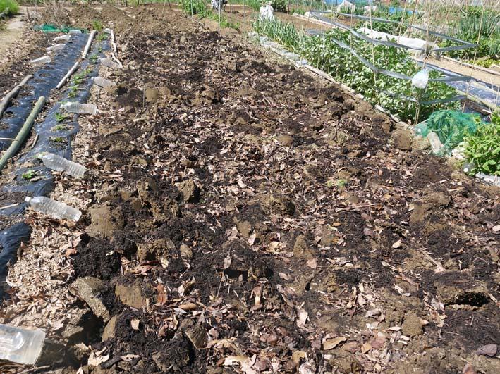 オクラ種まき&ネギ土作り&ジャガイモの被害軽微3・31_c0014967_1738572.jpg