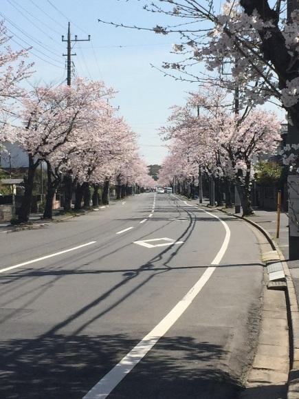 春ですね♡_a0088668_11553143.jpg