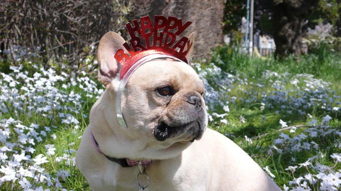 Happy Birthday! 8th._f0143269_12555145.jpg