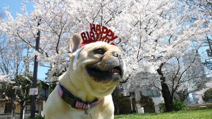 Happy Birthday! 8th._f0143269_1256996.jpg