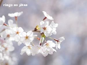 d0290073_2251617.jpg