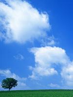 聖心館葉山道場空手通信 【 2015年4月号】_e0198590_10482057.jpg