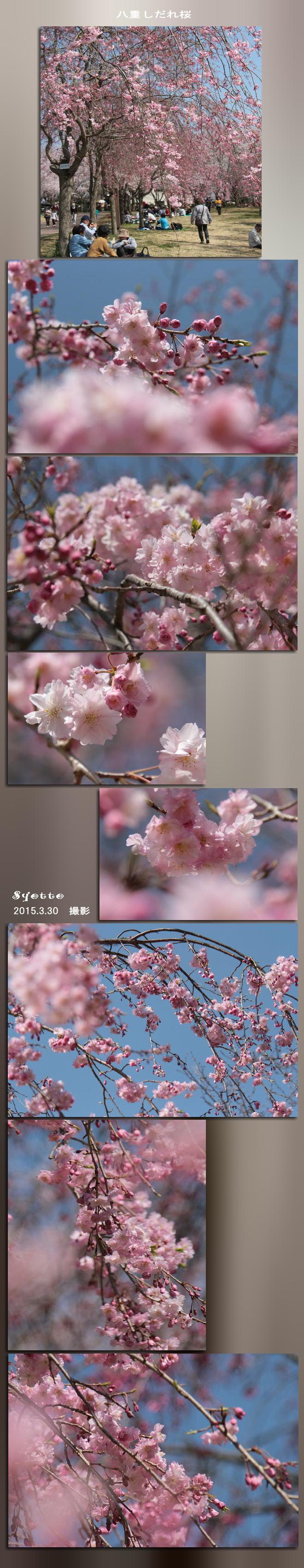f0164592_20374356.jpg
