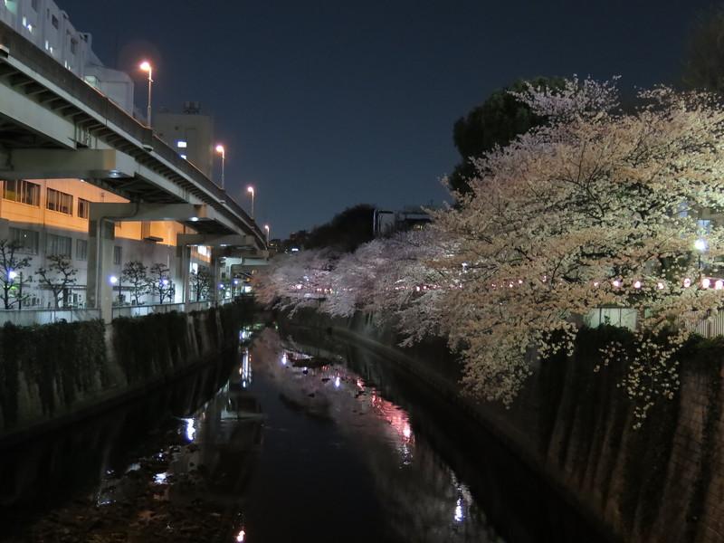 夜桜_b0249499_2374413.jpg