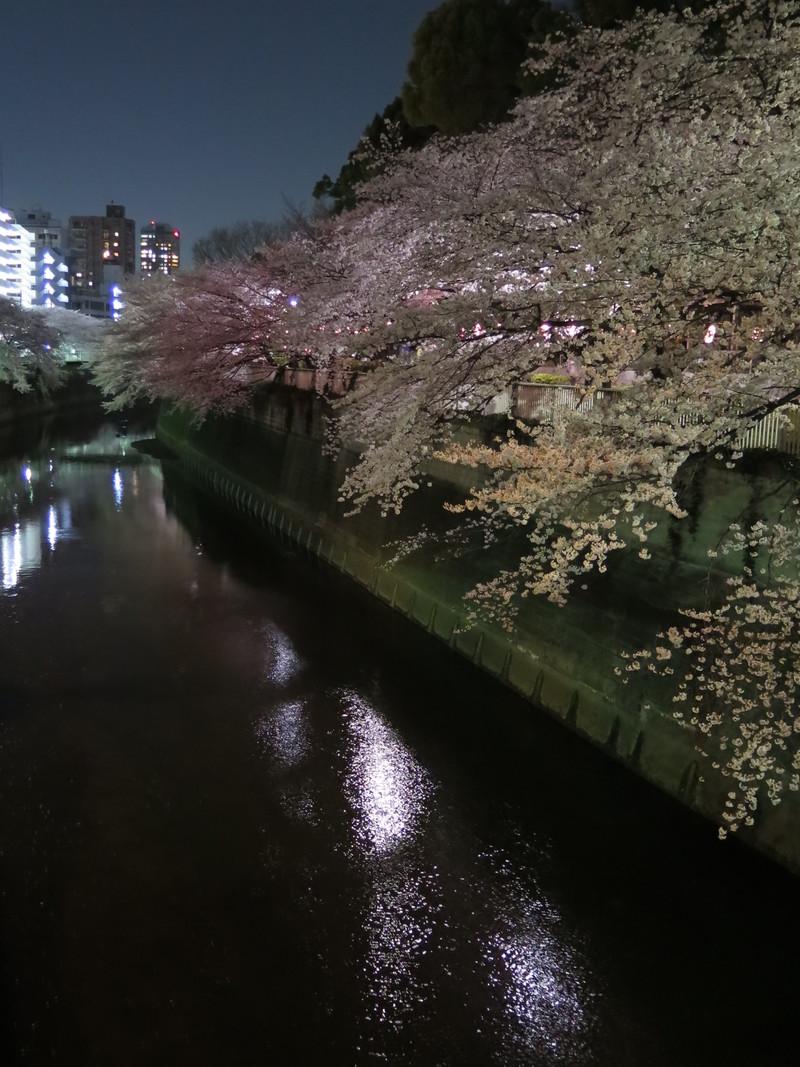 夜桜_b0249499_2384321.jpg