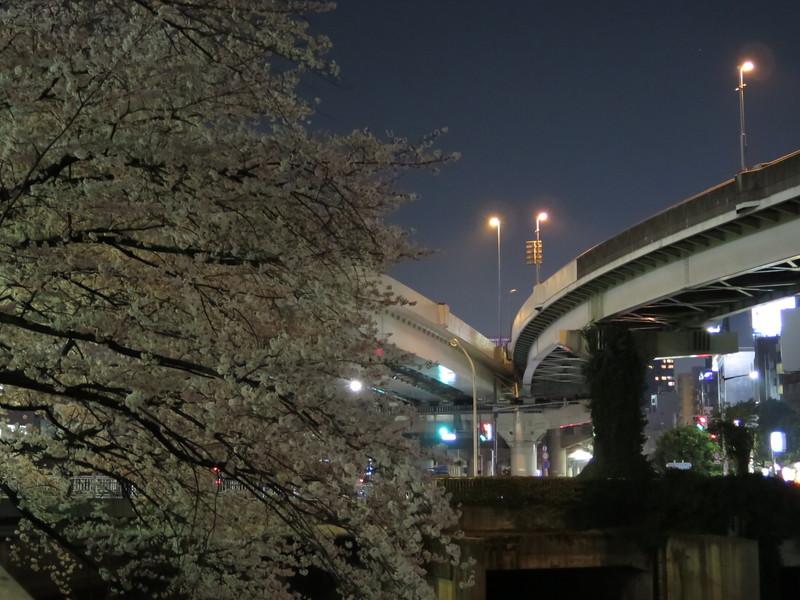 夜桜_b0249499_2391182.jpg